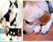 Антицарапки,  накладки на когти для животных,  защита коготков